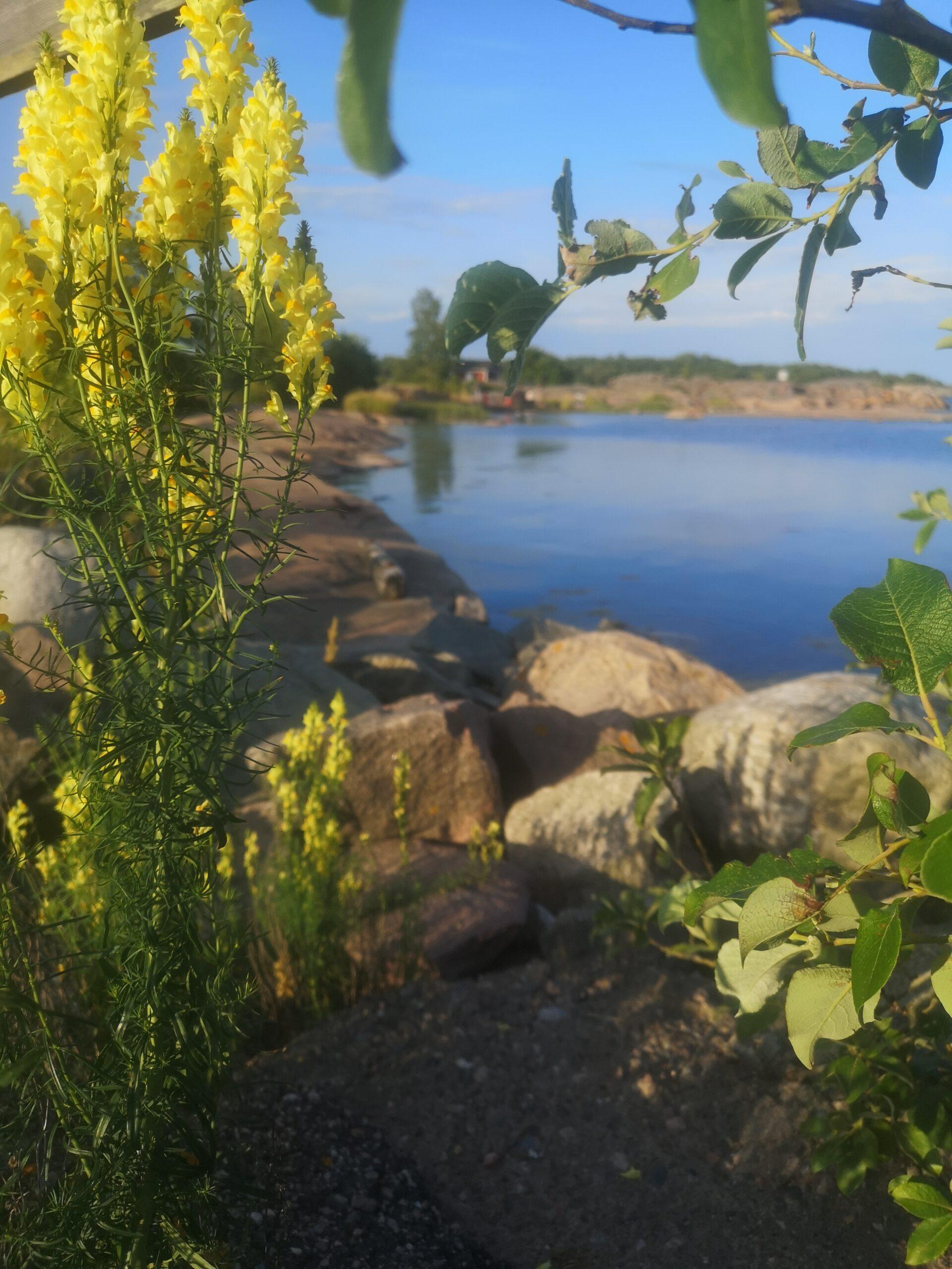 Schwedischer Sommer